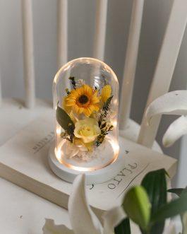 日光非洲菊永生花夜燈 |White flower