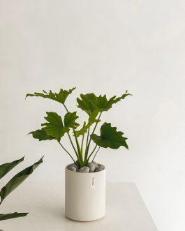 質感植栽-綠蔓絨|White flower